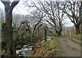 NZ0852 : Path beside the River Derwent in early spring by Robert Graham