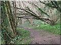 ST7360 : Leaning lumber by Neil Owen