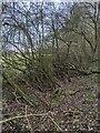 TF0820 : Wild hedge by Bob Harvey