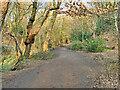 SD8003 : Path in Prestwich Clough by David Dixon