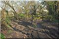 SX8669 : Muddy track, Decoy by Derek Harper