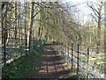NY4754 : Footpath in Glen Willie by Adrian Taylor