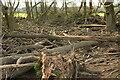 SX8574 : Flood debris in pond, Teign flood plain by Derek Harper