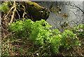 SX7863 : Leaves by the Dart by Derek Harper