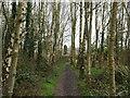 TG2932 : Dwelling seen through Trees by David Pashley