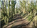 SD2878 : Woodland Path, Gill Banks by Adrian Taylor