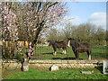 ST8051 : Horses beside the church by Neil Owen