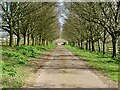 SO7433 : Tree-lined road to Bromesberrow church by Philip Halling