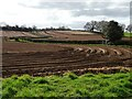 SO7334 : Fields planted with potatoes by Philip Halling
