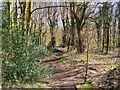 SD8003 : Prestwich Clough by David Dixon