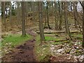 NT2438 : Path junction in Cademuir Forest by Jim Barton
