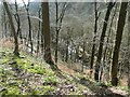SD9829 : Purprise Wood and Bridge Clough by Christine Johnstone