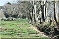 SU2620 : Line of trees toward Sandown Farm by David Martin