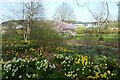 SE2853 : Daffodils and learning centre by DS Pugh