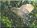 TQ2081 : House sparrow flying by David Hawgood