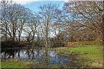NH5757 : Lochan in Drummondreach Oak Wood by Julian Paren
