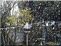 SO9194 : April Snow by Gordon Griffiths