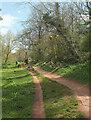 SX8963 : Tree-felling, Cockington Meadows by Derek Harper
