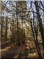 TF0820 : Sunlight in the trees by Bob Harvey