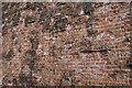 NJ2844 : Brick Wall by Anne Burgess