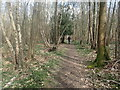 TQ7939 : A footpath through Home Wood by Marathon