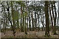 TL8090 : Lynford: The southern edge of Snake Wood by Michael Garlick