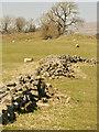 NY9226 : Old wall by Mick Garratt