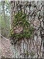 TF0820 : Home to a moss by Bob Harvey