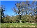 TQ6228 : Ladder up a tree by Marathon