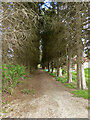 SO8254 : Tree-lined path between new developments by Chris Allen