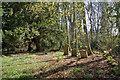 NH5354 : A corner of the graveyard by Richard Dorrell