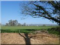 SX9783 : Powderham Park and distant view of Exe Estuary by David Smith