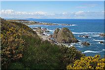 NJ4768 : Sea Stacks near Findochty by Anne Burgess