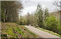 NY1314 : Log pile beside forest road by Trevor Littlewood