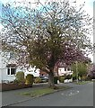 NS5573 : An interesting tree by Richard Sutcliffe