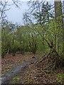 TF0820 : Wet Woods by Bob Harvey