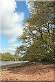 SX8456 : Dart foreshore near Stoke Point by Derek Harper