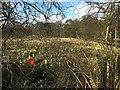 SP2774 : HS2 enabling works, Crackley-Burton Green, March 2021 (5) by Robin Stott