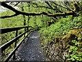 H2774 : Elevated walk, Sloughan Glen by Kenneth  Allen
