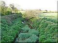 TM1763 : River Deben downstream from Cross Green Bridge by Adrian S Pye