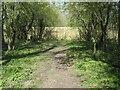 SE8842 : Southern fence across the railway embankment, Goodmanham by Christine Johnstone