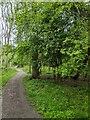 TF0820 : Trees by the path by Bob Harvey