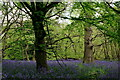 TQ2657 : Banstead Wood by Peter Trimming