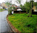 ST3090 : Buttercups on grass, Pinewood Close, Malpas, Newport by Jaggery