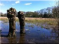 SP3265 : Welches Meadow flooded in early spring by Alan Paxton