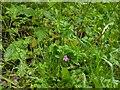TF0720 : A shy geranium by Bob Harvey