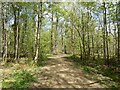 NY5561 : Path in Miltonrigg Woods by Adrian Taylor