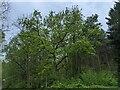TF0820 : Spring foliage by Bob Harvey