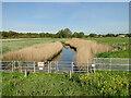 TM2547 : River Fynn at the sluice before Martlesham Creek by Adrian S Pye