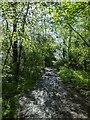 TF0820 : A muddy footpath by Bob Harvey
